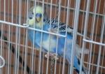 Beady - Parakeet